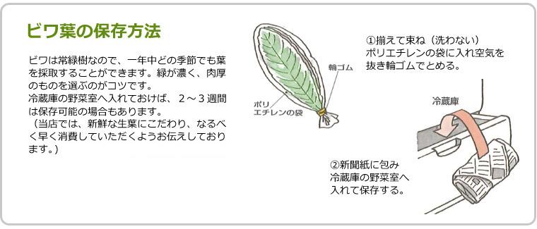 ビワ葉の保存方法