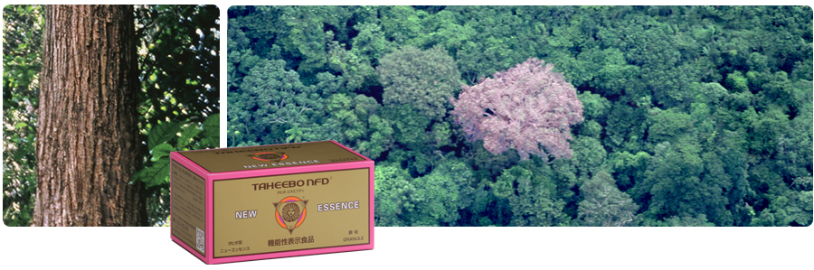 天然の植物色素