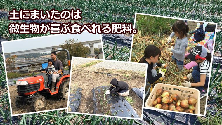土にまいたのは微生物が喜ぶ肥料