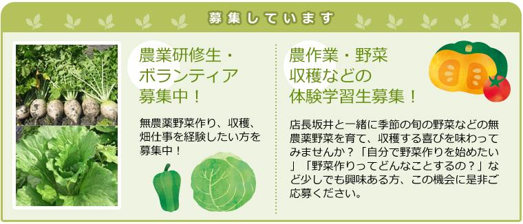 農作業・野菜収穫などの体験学習生募集